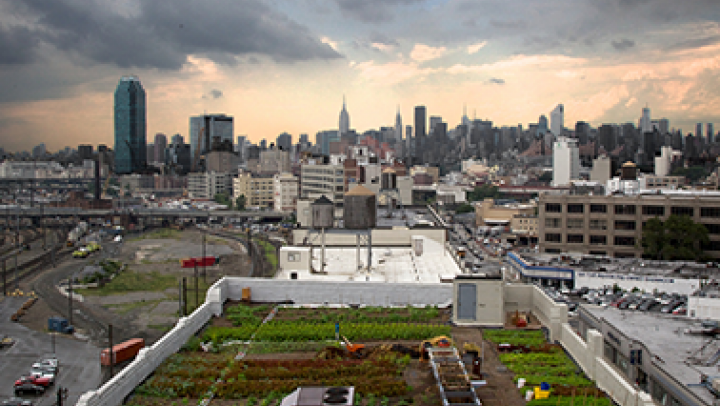 The Brooklyn Grange Farm